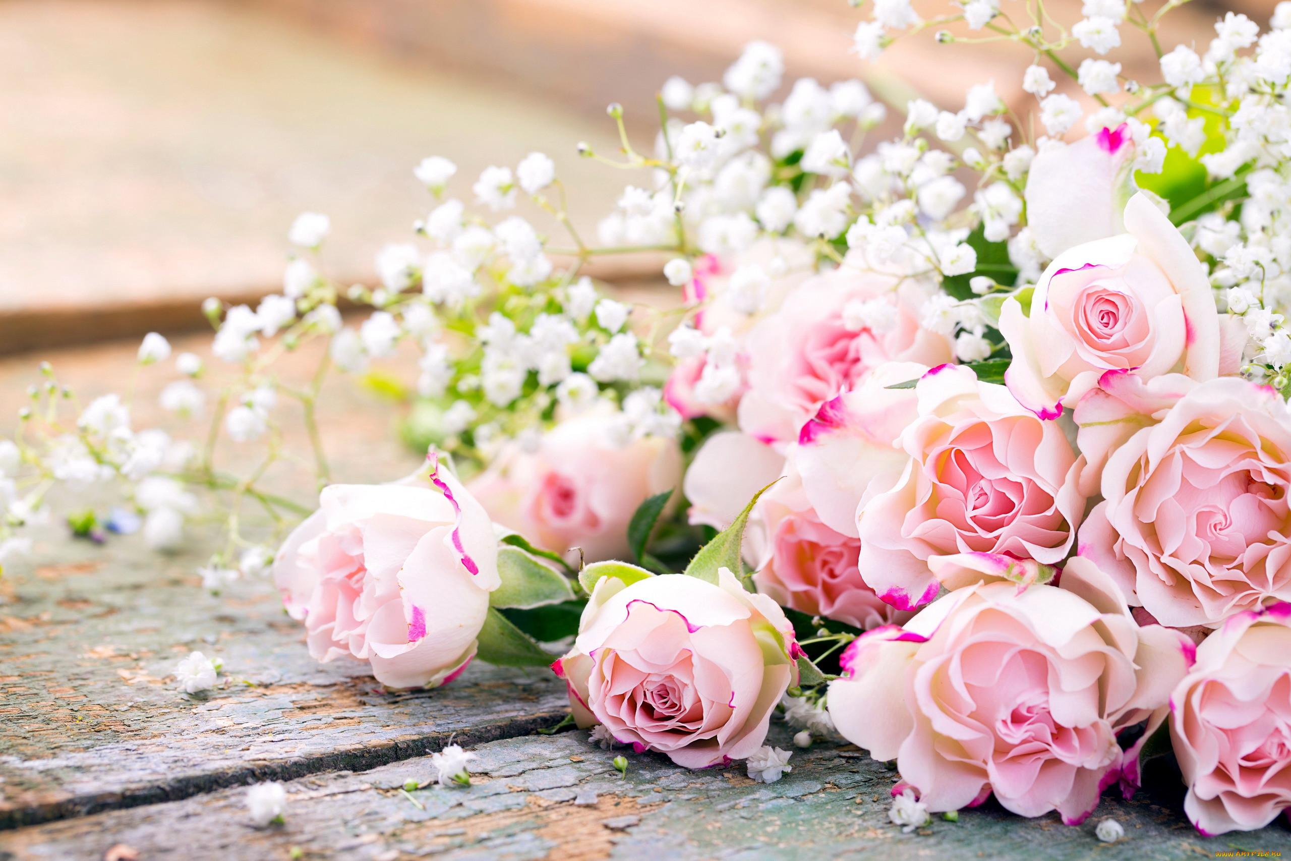 Фото цветы нежность